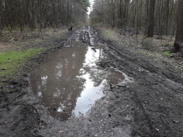 Verschlammter Waldweg mit tiefen Pfützen