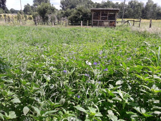 Blumenwiese vor Insektenhotel