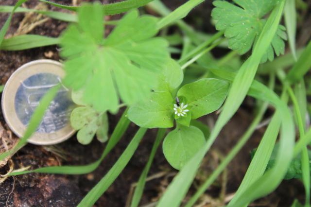Kleine weiße Blüte mit noch viel kleinerem Käfer