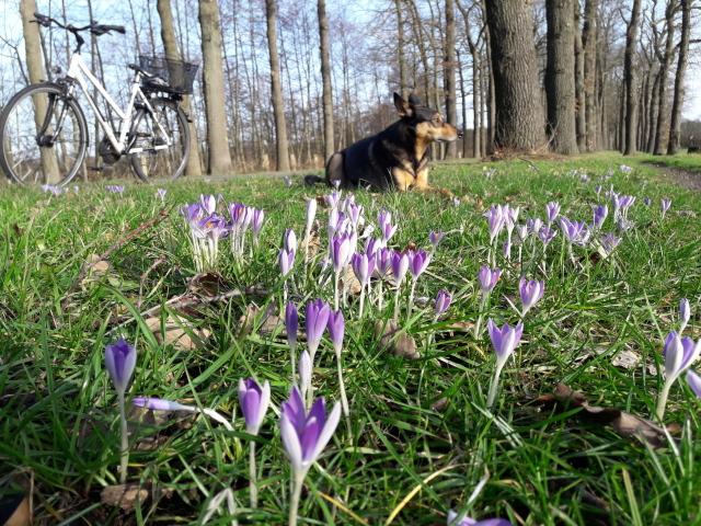 hund mit blühenden Frühlingsblumen
