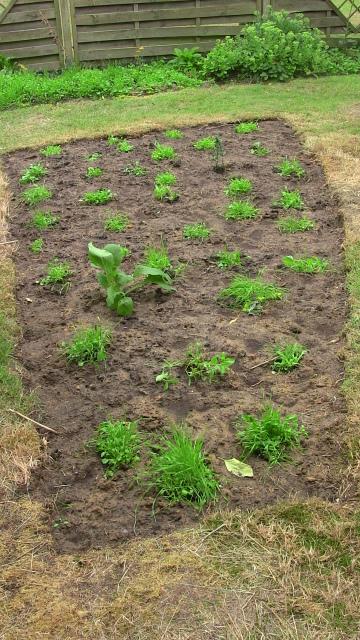 Angehende Blumenwiese mit initialer Bepflanzung (inselartig)
