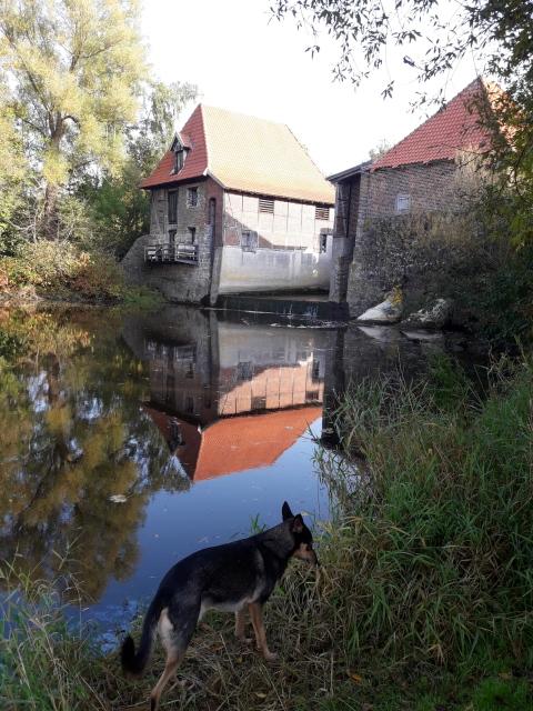Alte Mühle - Spiegelbild im Fluß