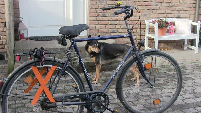Fahrrad mit Hund